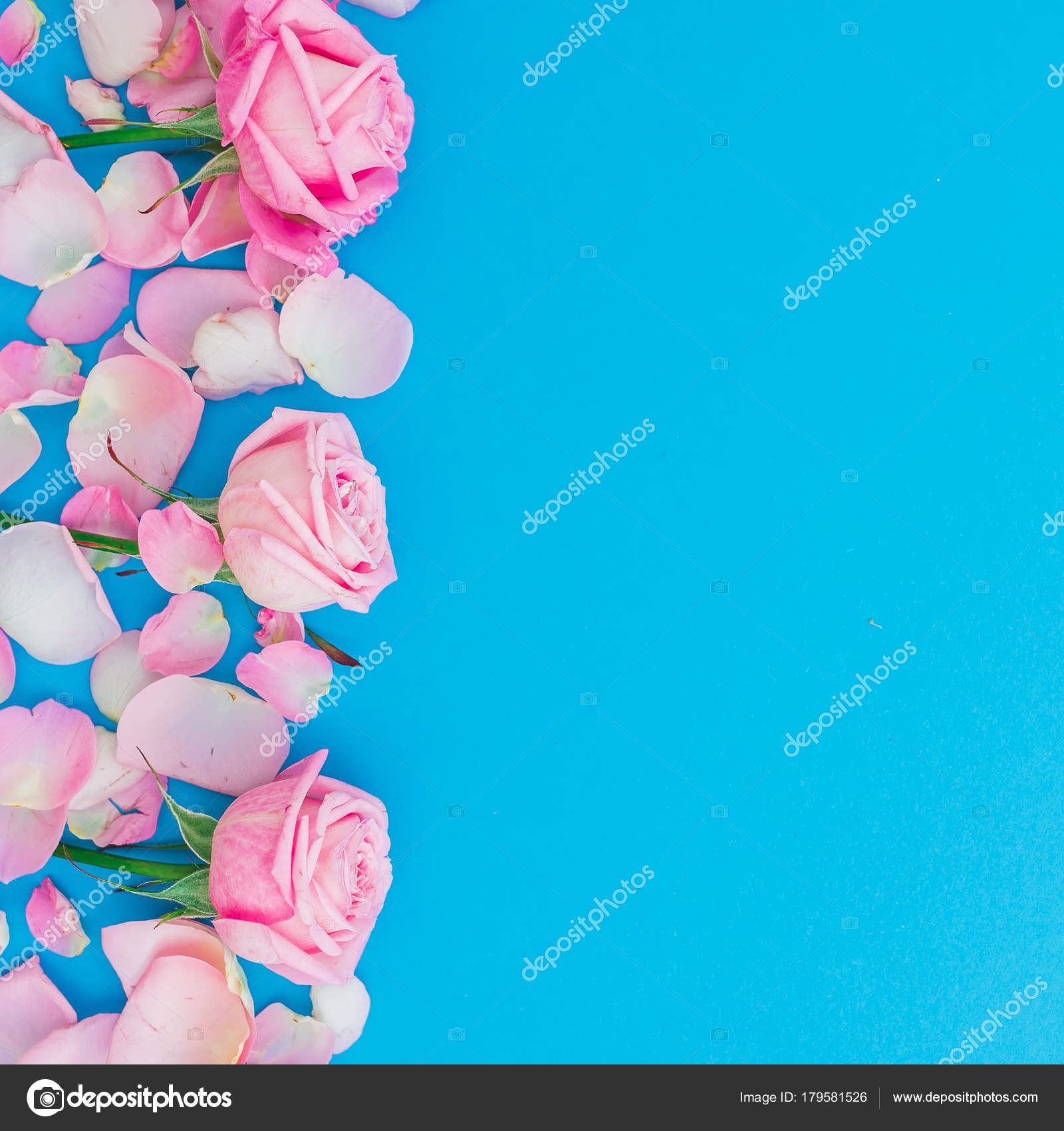 afd831e40a432 Floral Pattern Pink Roses Petals Blue Background Flat Lay Top — Stock Photo