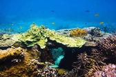 Fotografie Tropické ryby a korály reef v oceánu