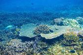 Fotografie Tropická korály reef v oceánu