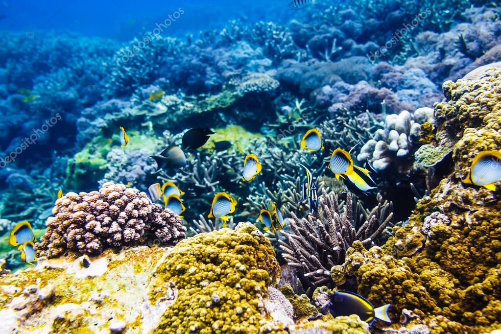 Tropical fish and corals reef in ocean.