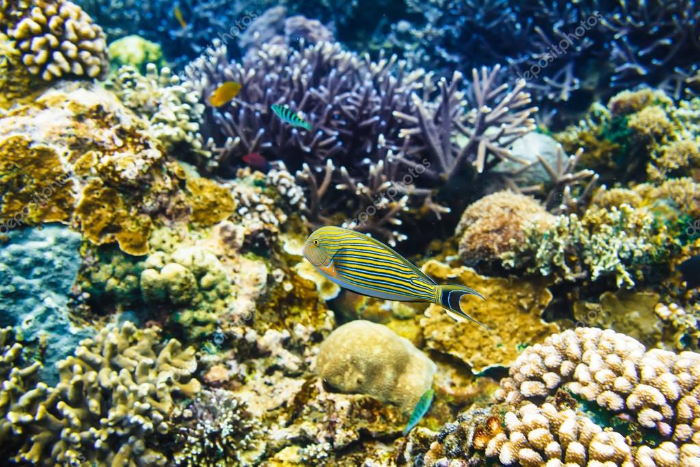 Tropical fishes and corals reef in ocean.
