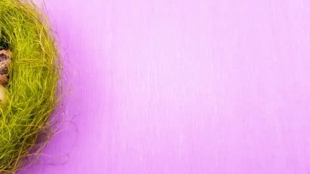 Húsvét színes fürjtojás zöld fészek lila háttér