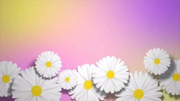 Animace květiny heřmánek na pastelově fialové a žluté pozadí.