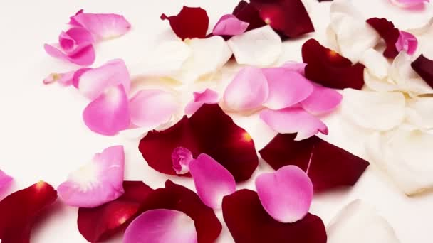 White, red and pink rose petals on white background.