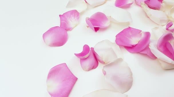 Bílé a růžové růžových lístků na bílém pozadí