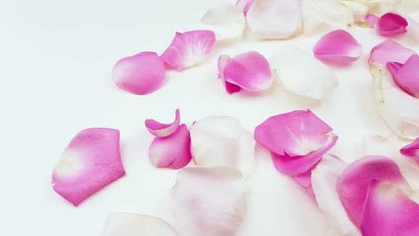 White and pink rose petals on white background.