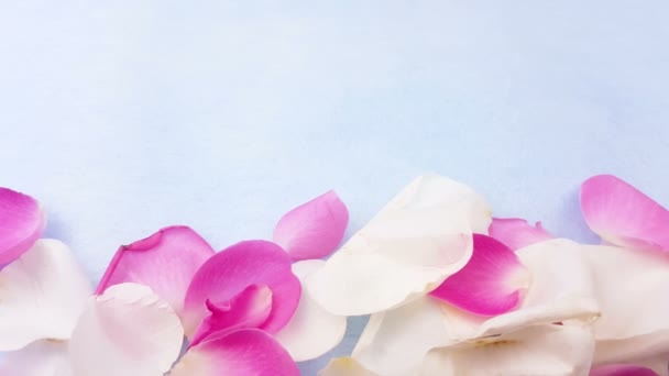 White and pink rose petals on pastel blue background. Close up.
