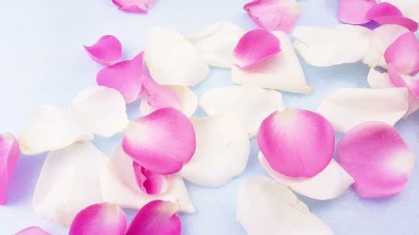 Fehér és rózsaszín rózsaszirom pasztell kék háttér. Közelről.
