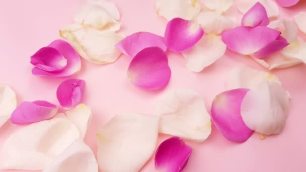 White and pink rose petals on pastel pink background.