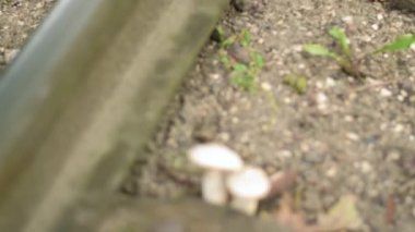 Video footage of the rails, soft focus, extreme close up, vertical panorama