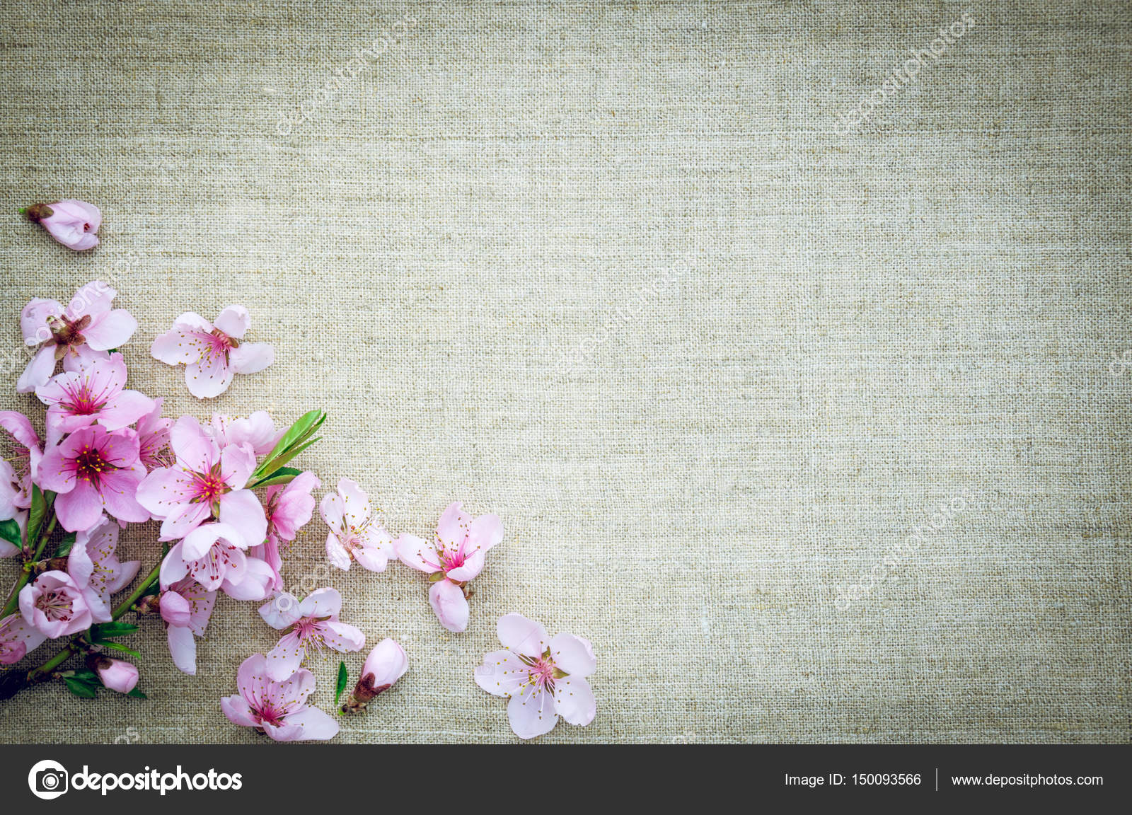 Background for creativity holiday greetings stock photo scenic background for greeting card branch of a flowering peach tree on the background of linen fabric background in rustic style photo by konoplizkaya m4hsunfo