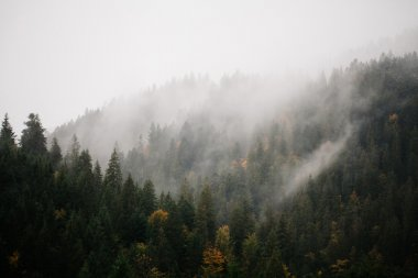Forest with fog over the mountains