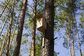 ház a madarak egy fenyő-fa az erdő