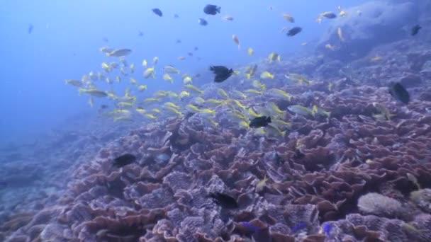 Škola goatfishes podmořský svět přírody z Filipín.