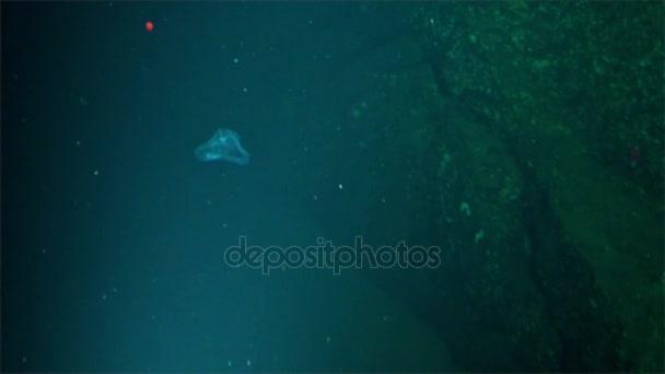 Podmořské hlubinné život od podmořských Kostarika Pacific Ocean Cocos Island.
