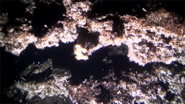 Podvodní hlubinných útesy pohled z podmořských Tichého oceánu Cocos Island.