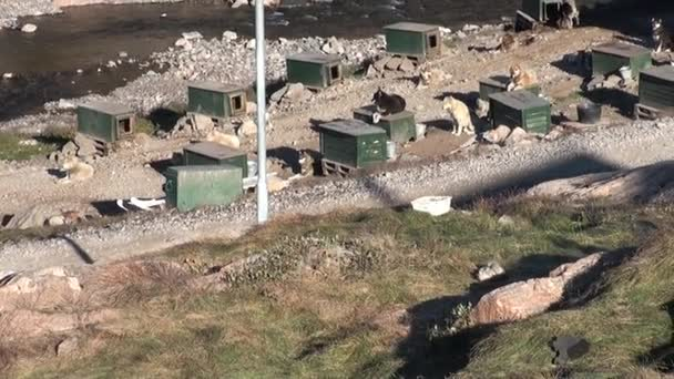 Dog sleds in city on the shores of Arctic Ocean in Greenland.