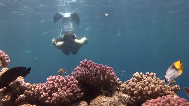 Unterwassermodel im Meerjungfrauenkostüm posiert im roten Meer für die Kamera.