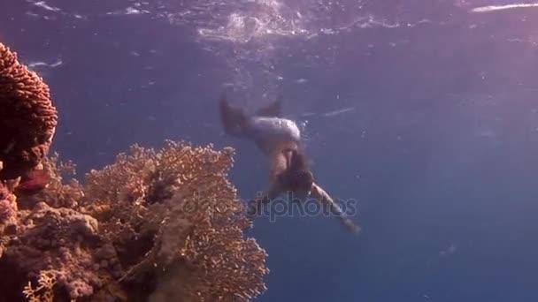 Volný potápěč pod vodou modelu plave v vílu v Rudém moři