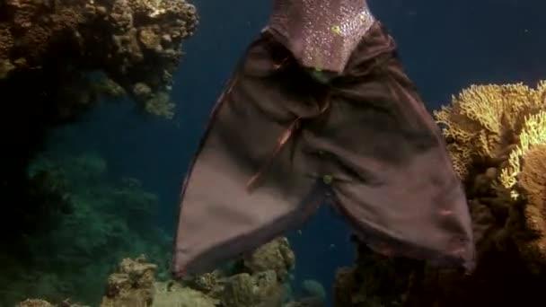 Unterwassermodell Freitaucher schwimmt in klarem, blauem Wasser im roten Meer.