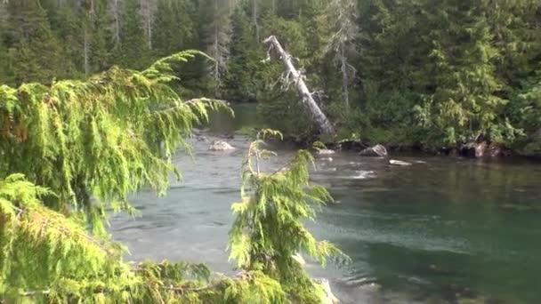 Horská klidné řeky klid na pozadí úžasné krajiny Aljašky.