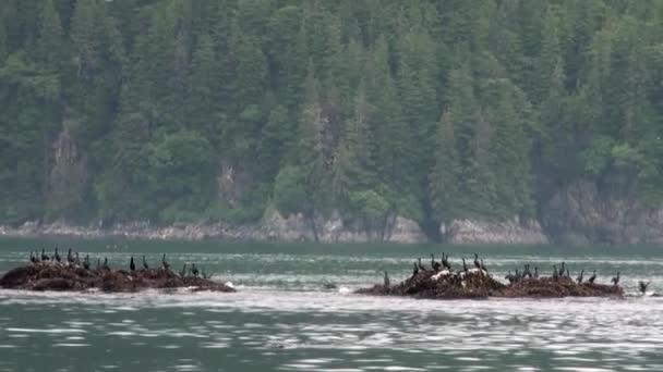 Ptáci na skále ve vodě oceánu na pobřeží pozadí na Aljašce.