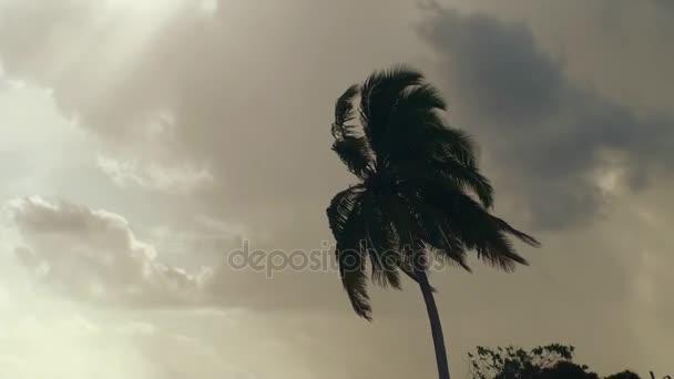 Pálmafák, szürke felhők az égen, a strandon Maldív-szigetek.
