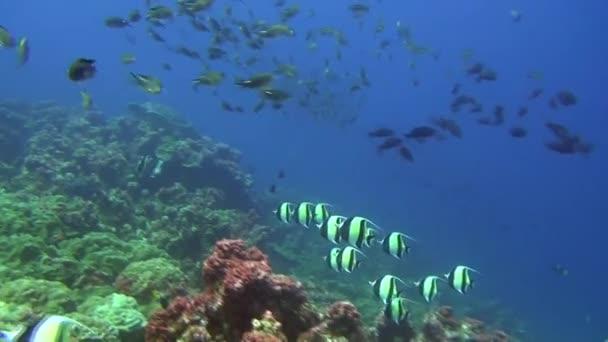 Iskolai hal és a víz alatti háttér a Galápagos-szigetek tengeri cápa.