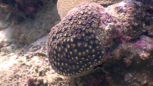 Obyvatelé z písčité dno pod hladinou oceánu wildlife Filipíny.