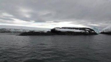 Penguin snow coastline in ocean of Antarctica.