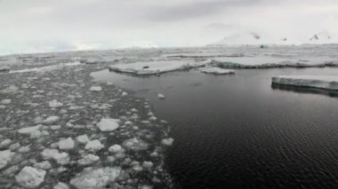 Seals on ice floe snow in ocean of Antarctica.