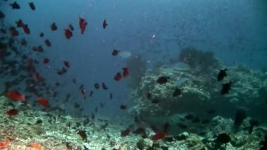 School of fish underwater on background of reflection sun seabed in Maldives.