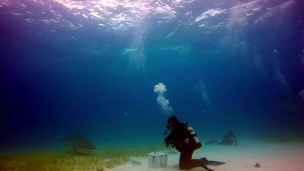 Egy nagy víz alatti bika cápa-Atlanti óceán simogat.