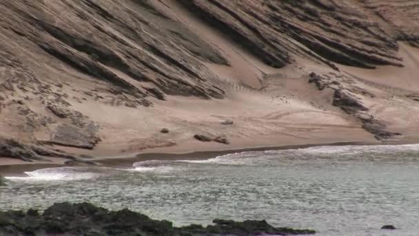 Pečeť Lev relaxovat na písčité pobřeží Galapág