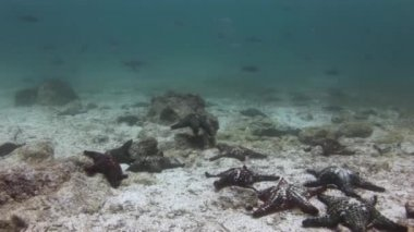 Starfish on seabed in Galapagos.