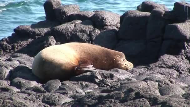 Seal lion relax on beach Galapagos.