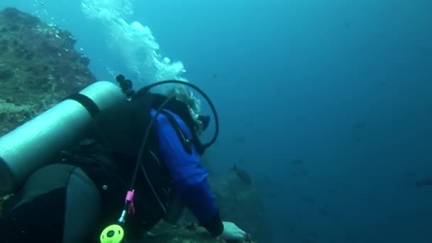 Scuba divers underwater in Galapagos.