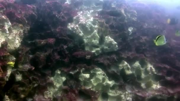 Fish on seabed underwater in Galapagos.