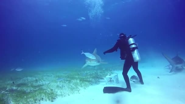 Diver holding a sharks nose underwater on sandy bottom of Atlantic Ocean.