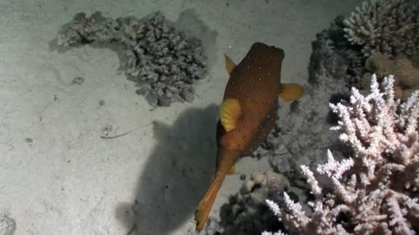 miejsce do podłączenia ryb w morzu elitarne codzienne znaki, że umawiasz się z mężczyzną