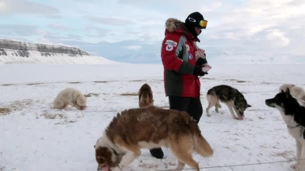 sled dog and people expedition on north pole in arctic stock