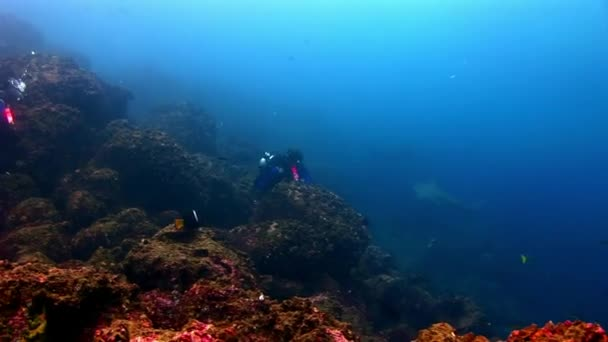 Scuba divers near shark underwater on background of seabed.