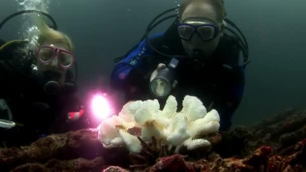 Scuba divers and white corals.