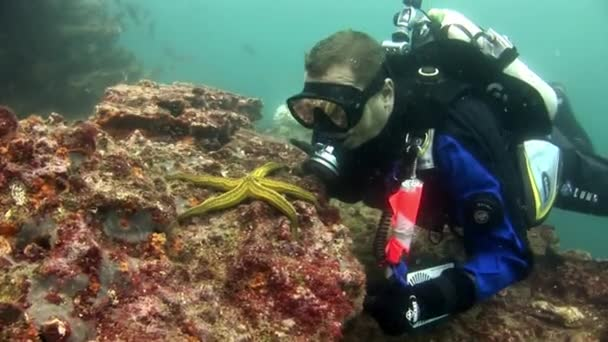 Scuba divers and starfish underwater on background of seabed.