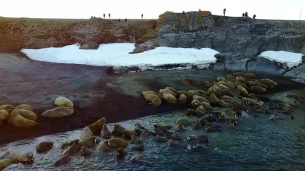 Mroži a lidé ekologové na pobřeží Severního ledového oceánu helikoptéra aero zobrazení.