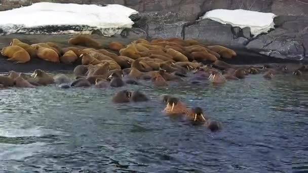 Walruses on background of wilderness Arctic Ocean aero view on New Earth.