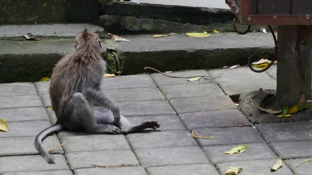 Monkey sitting in Bali.