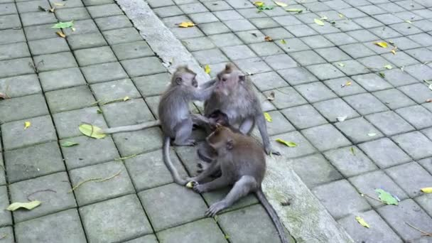 Monkey baby with family in Bali.