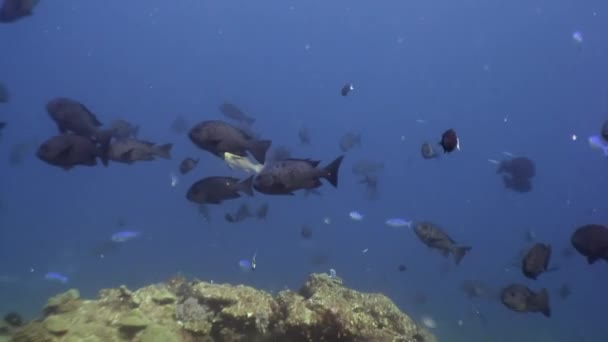 School of fish underwater on background of amazing seabed in Maldives.