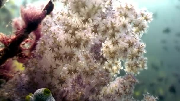 Tree soft coral underwater amazing seabed in Maldives.